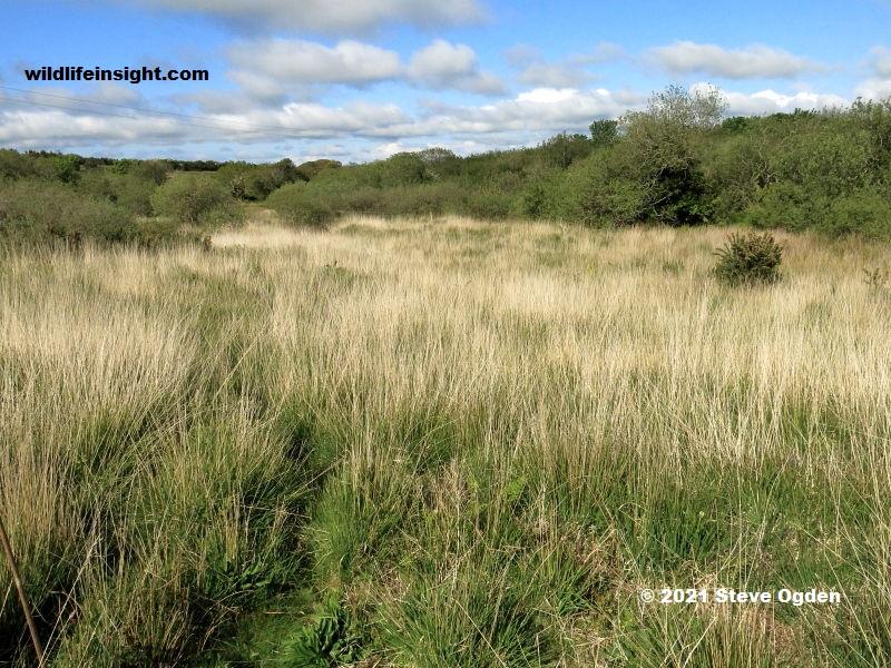 Trelusback Marsh Fritillary butterfly site