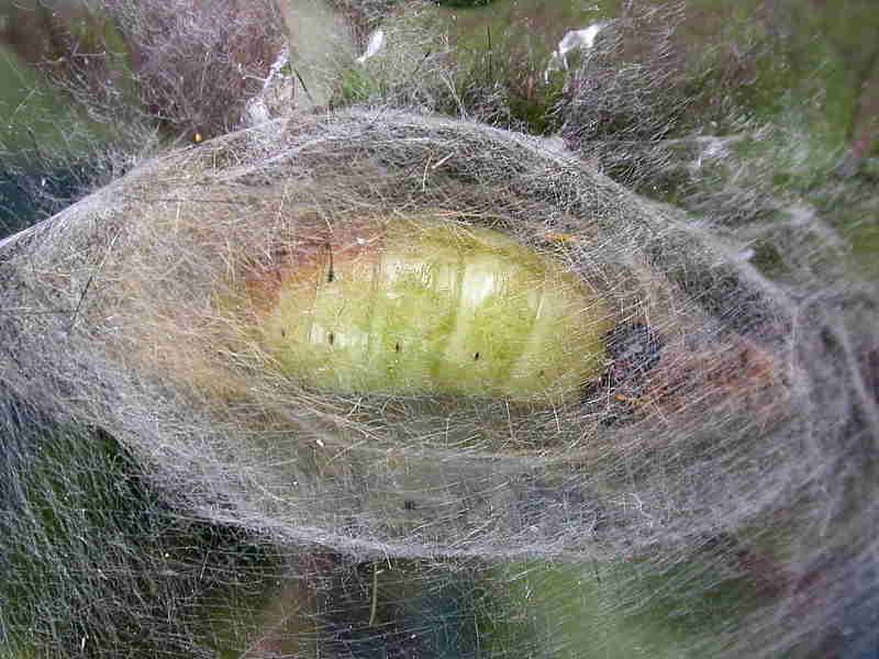 Caterpillar Life