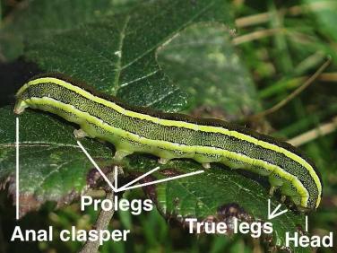 Caterpillar parts
