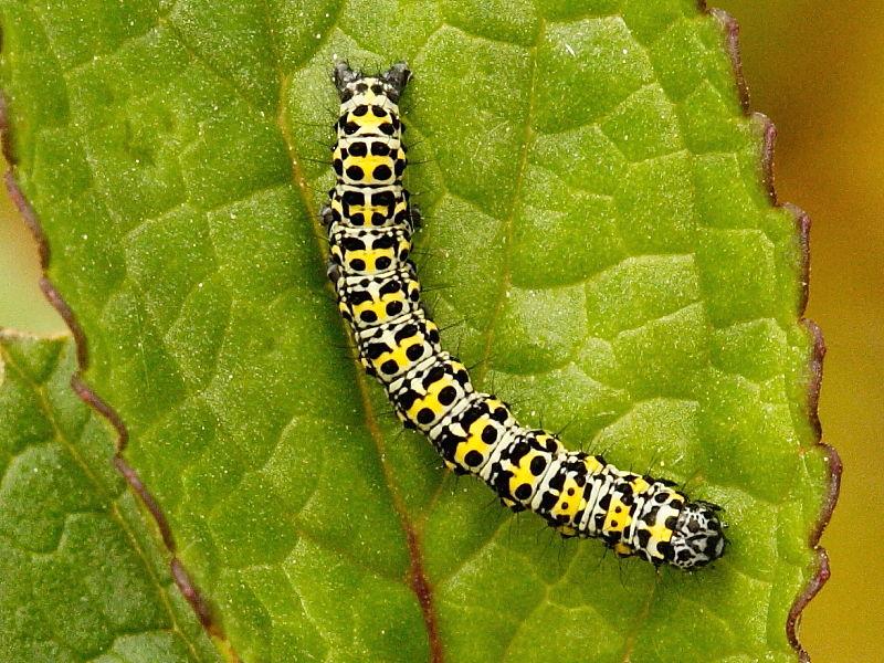 The caterpillars we ve  Caterpillar