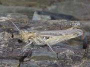 Grasshopper Gallery