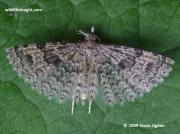 1288 Twenty-plume Moth (Alucita hexadactyla)