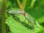 British Bugs