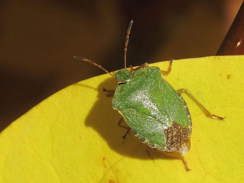 British Bugs | Wildlife Insight