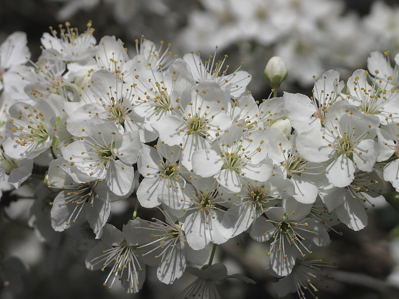 Wild flowers in spring hedgerows | Wildlife Insight
