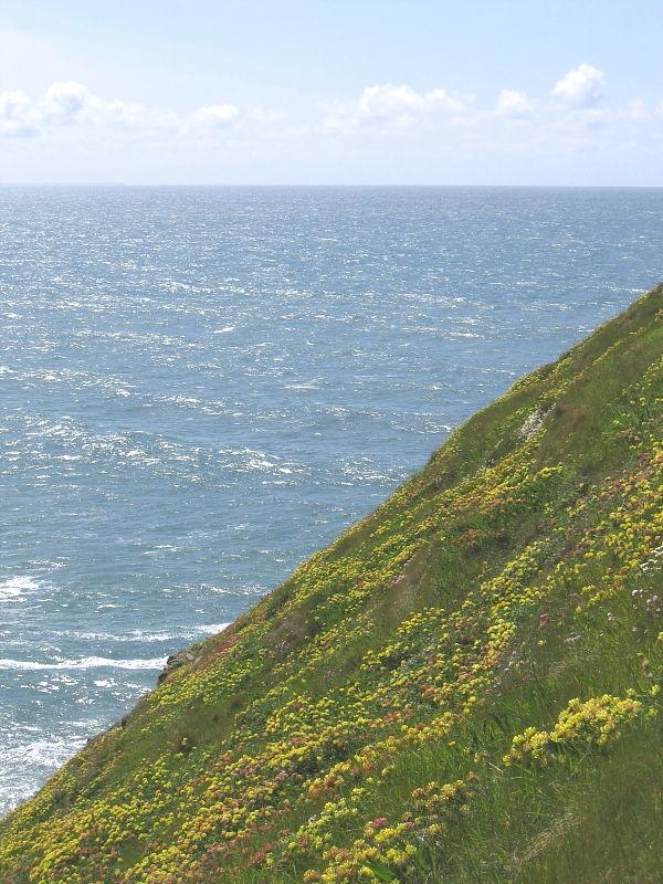 coastal wild flowers in cornwall wildlife insight