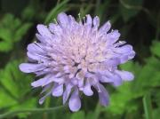 Wild Flower Gallery