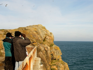 St Ives Island, Cornwall, sea-bird watching