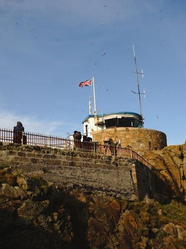 St Ives Island, Cornwall, sea-bird watching