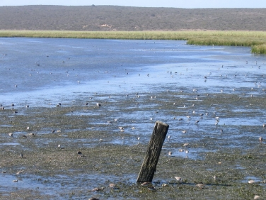 Flooding tide at Langebaan Lagoon, West Coast National Park, South Africa © Steve Ogden
