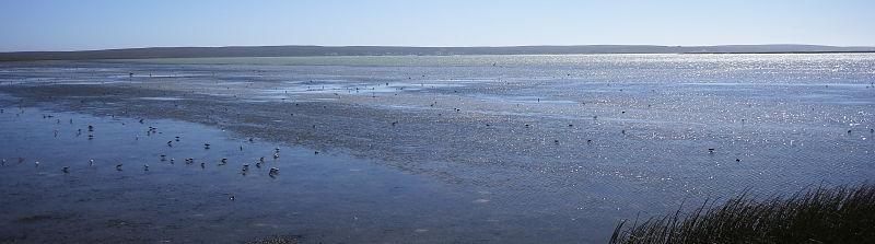 Langebaan Lagoon mud flats, West Coast National Park, South Africa
