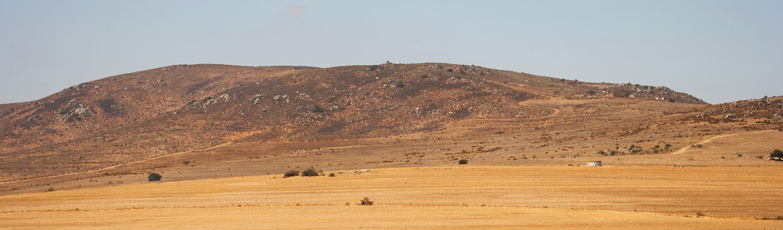 Darling Farmlands, South Africa © 2006 Steve Ogden