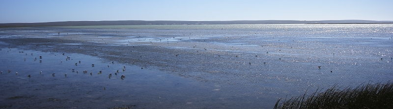 Langebaan Lagoon mud flats, West Coast National Park, South Africa