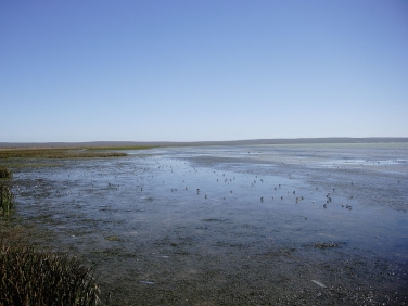 Langebaan Lagoon mudflats at low tide viewed from the Geelbek Bird hide