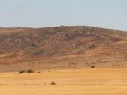 Darling Farmlands, South Africa