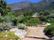 Landscaped garden, Kirstenbosch National Botanical Gardens, Cape Town, South Africa