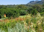 Flower borders, Kirstenbosch National Botanical Gardens, Cape Town, South Africa