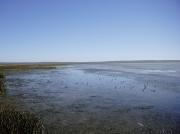 Langebaan Lagoon mudflats at low tide viewed from the Geelbek Bird hide