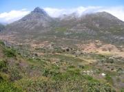 Mountain Fynbos on the Cape Peninsular, South Africa