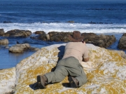 Photographing Africa Black Oystercatchers in the Cape Of Good Hope Reserve, South Africa