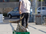 Porter pulling Tuna up Simon's Town quay, Cape peninsula, South Africa