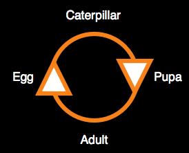 Life-cycle