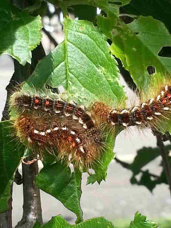 Caterpillar safety warning