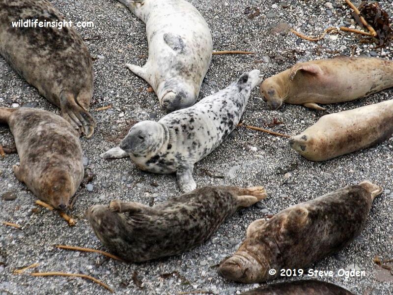 Seals on Cornish beach