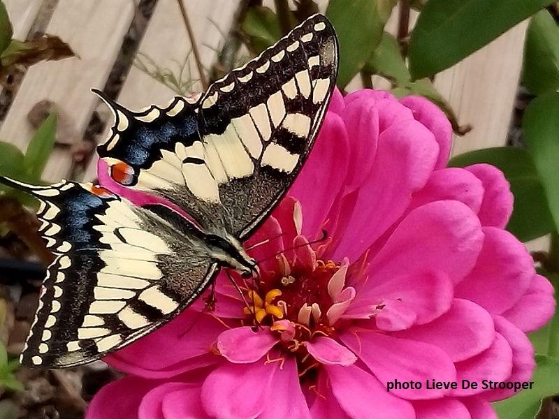 Catalonia butterflies