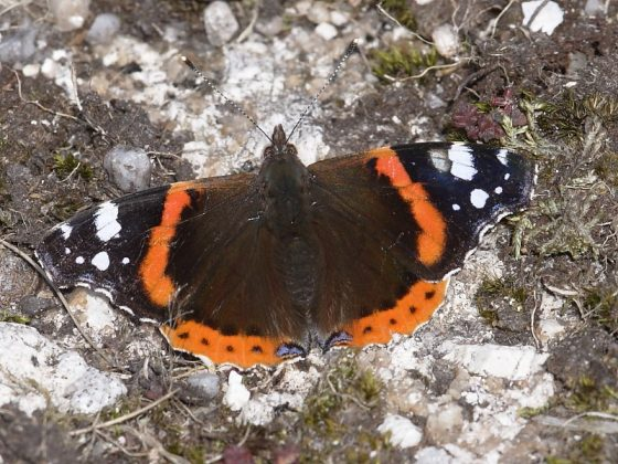Overwintering moths and butterflies survey